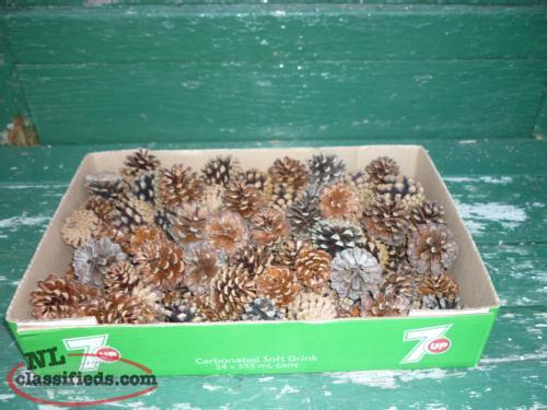 7KG. BOXES OF 2IN. PINE CONES 100 CONES PER BOX