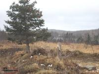 Land for a Cabin or Trailer - Second Pond Rd, Bay Roberts - MLS# 1161782