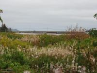 Level Lot - 16A Delaneys Ave, Bay Roberts - MLS# 1183544