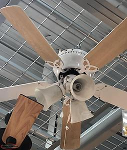 Three light ceiling fan