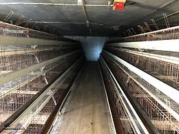 One section of 4 Tier 128 birds layer chicken cages