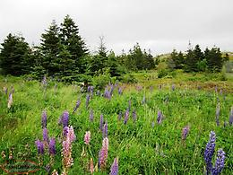 Half-Acre Lot - 2 Menchions Lane, Bay Roberts - MLS# 1133186