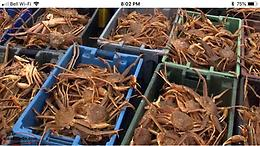 WANTED: Bonavista Bay Crab Licence, 5a