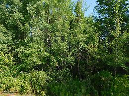 Land For Sale in Port Blandford