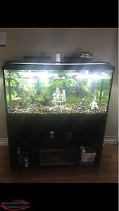 80 Gallon Fish Tank With All Accessories *shark Included*