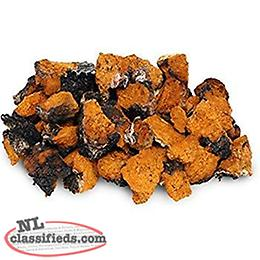 Chaga mushroom - chunks or ground