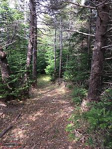 Bungalow with 2 acres wooded lot--ON OCEAN