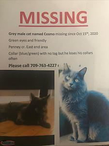 Missing cat!! reward for safe return