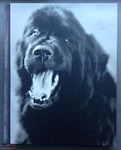 wanted GENTLE GIANTS - BRUCE WEBER - 1994 FIRST EDITION SIGNED
